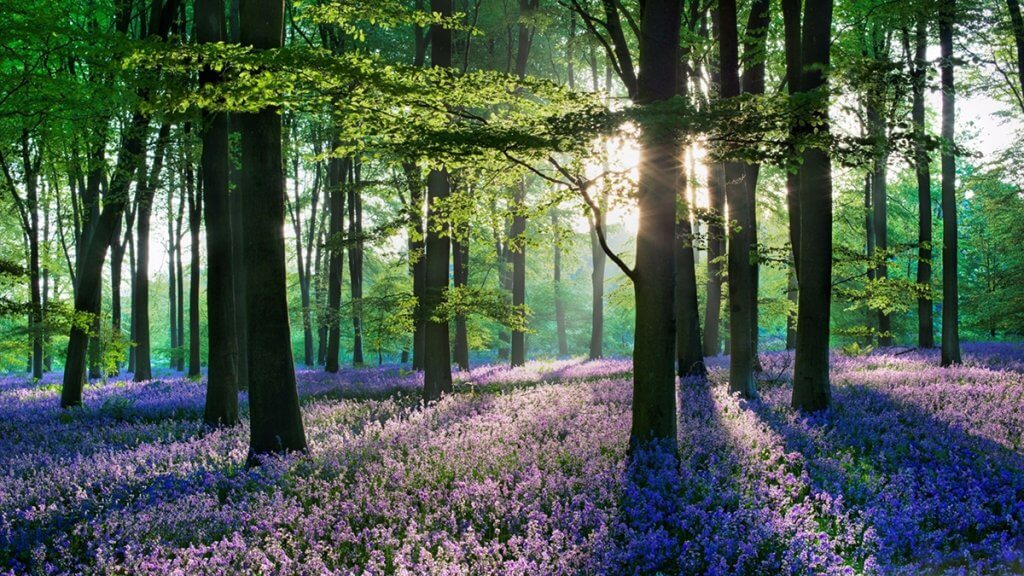 Collection of stunning forests in the world