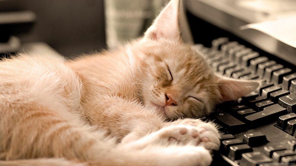 Myths About Sleep You Still Believe