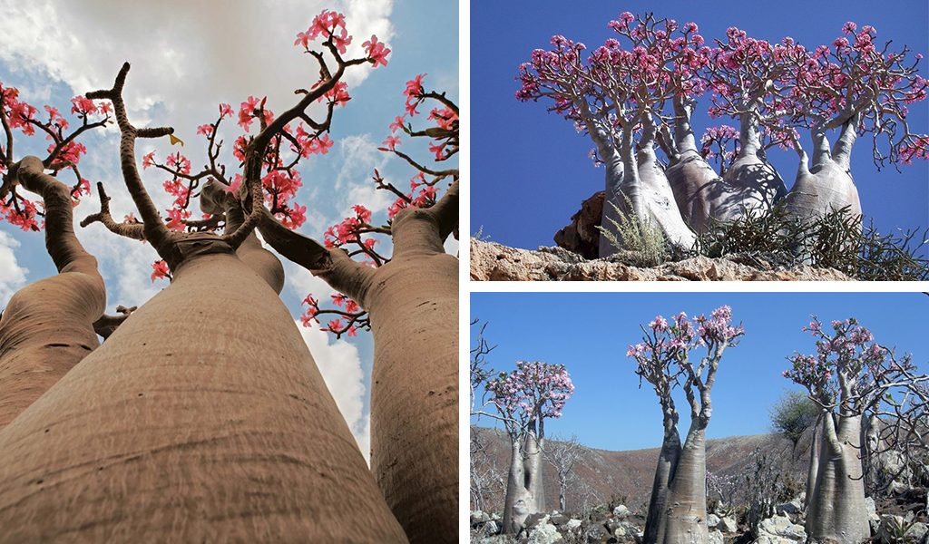 Most alien like place on Earth – The blissful Socotra Island