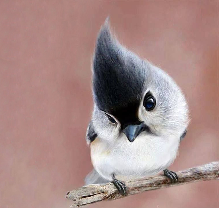 Cute and Charming – birds impossible to resist